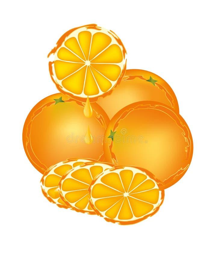 Oranges isolated. Oranges and slices on white background royalty free illustration