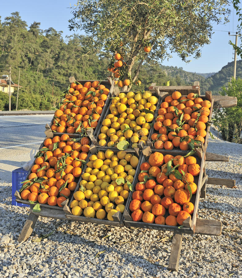 Download Oranges And Lemons For Sale Stock Image - Image: 9376301