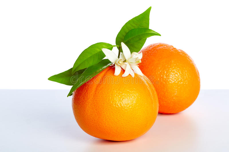 Oranges with orange blossom flowers on white. Oranges with orange blossom flowers in spring on white background royalty free stock images