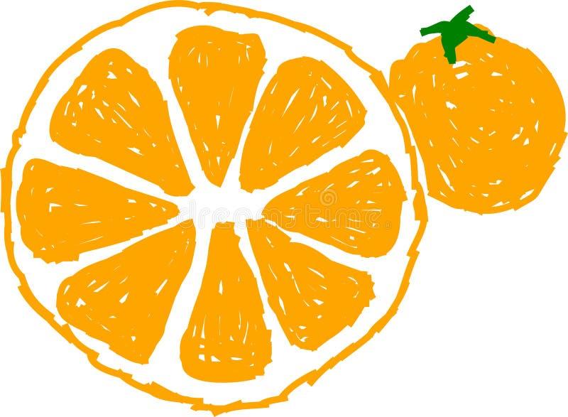 Oranges vector illustration