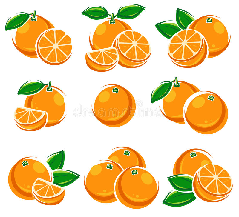 Oranges set. Vector stock illustration