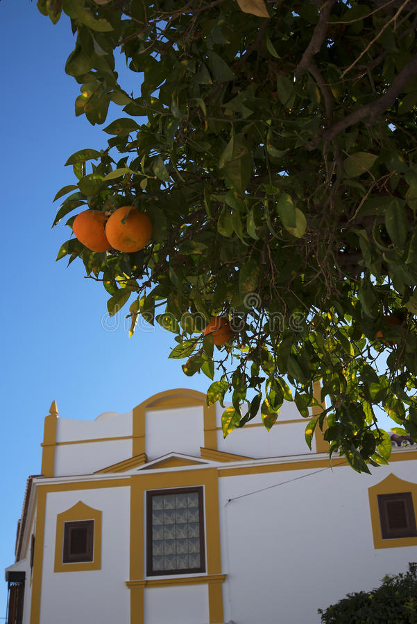 Oranges in the street in Nerja, a sleepy Spanish Holiday resort on the Costa Del Sol near Malaga, Andalucia, Spain, Europe. On the eastern end of the Costa del stock photography