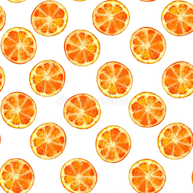 Oranges sur l'aquarelle blanche de fond illustration de vecteur