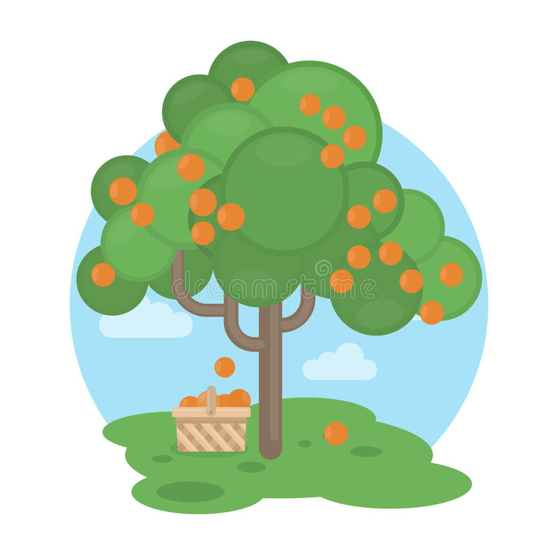 Oranges tree. Oranges tree with basket. Sweet and sour fruits royalty free illustration