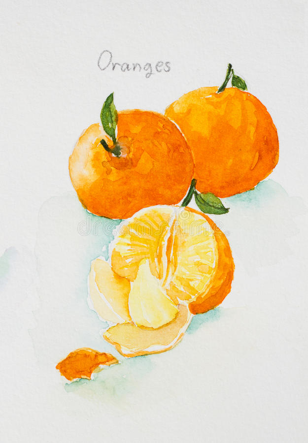 Oranges watercolor painted. Oranges watercolor on paper painted royalty free illustration