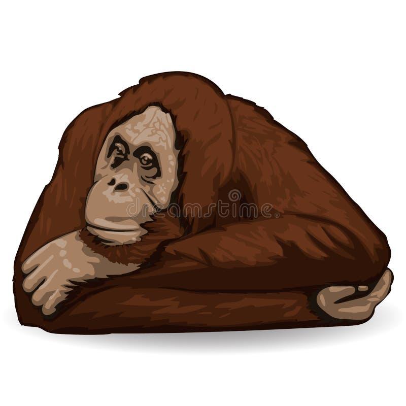 Orangoetan De nadenkende aap ligt file met gevouwen handen achter zijn hoofd vector illustratie