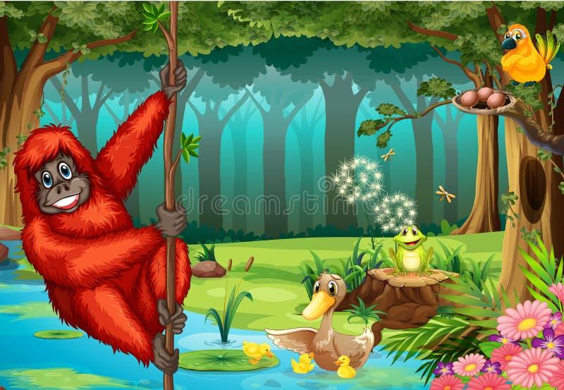 Orangotango na selva ilustração stock