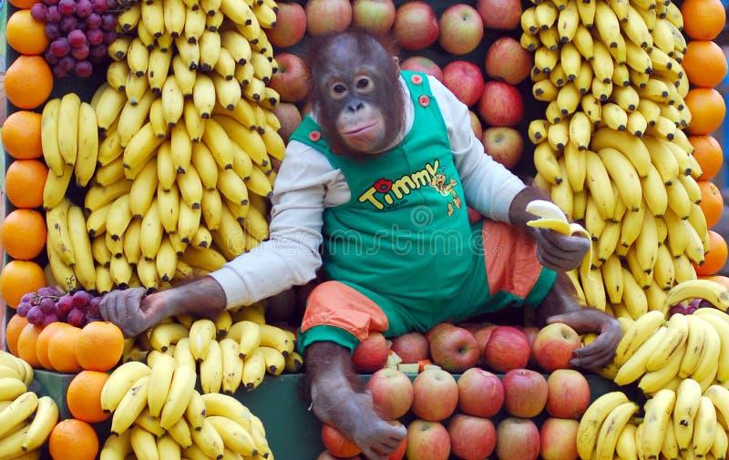 Orangután imágenes de archivo libres de regalías