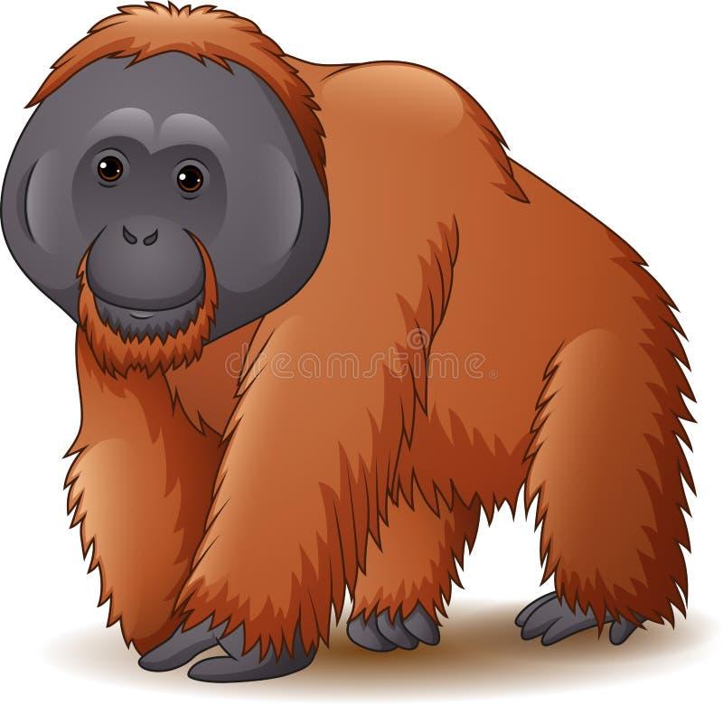 Orangután aislado en el fondo blanco libre illustration