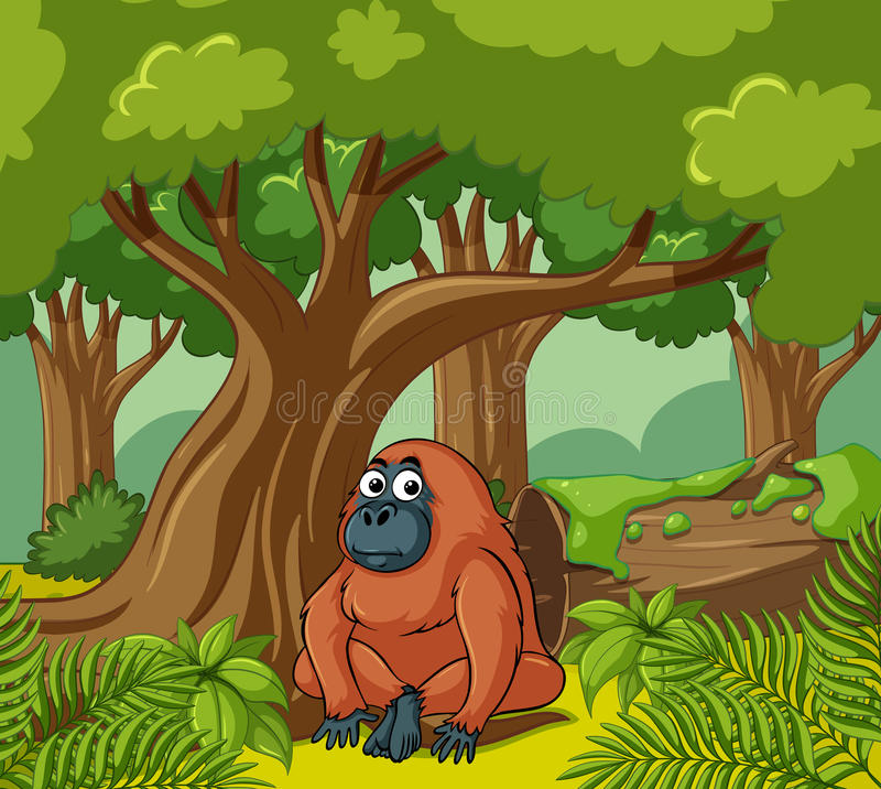 Orangutan ζωές στο δάσος διανυσματική απεικόνιση
