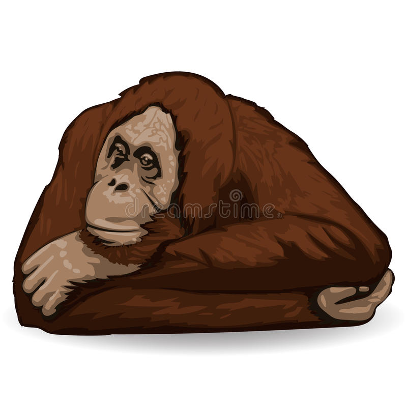 orangutan Ο στοχαστικός πίθηκος βρίσκεται συνοδευτικός με τα διπλωμένα χέρια πίσω από το κεφάλι του διανυσματική απεικόνιση