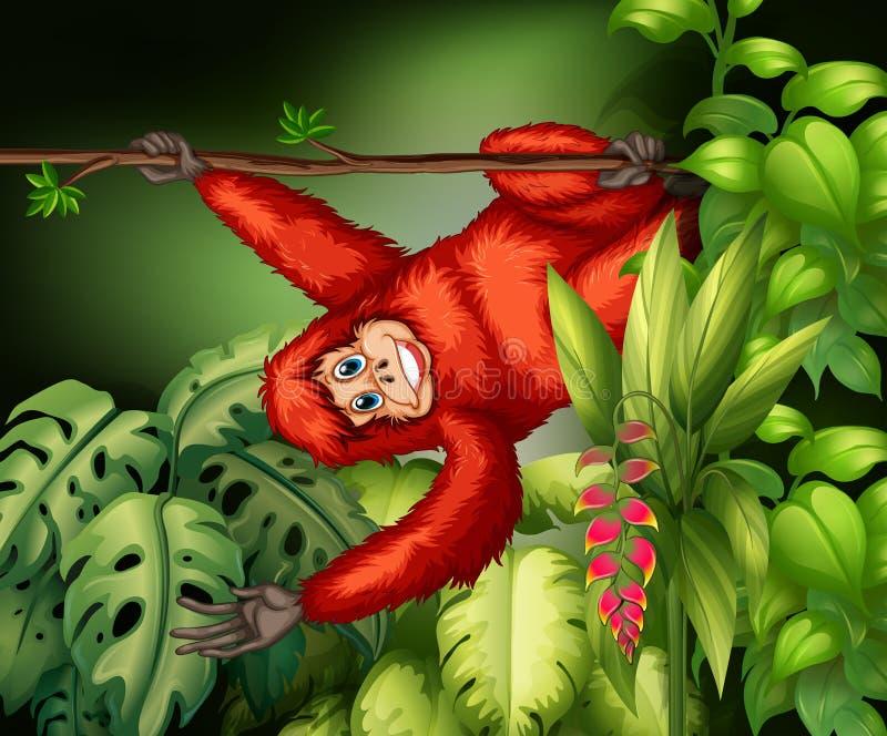 orangutan απεικόνιση αποθεμάτων