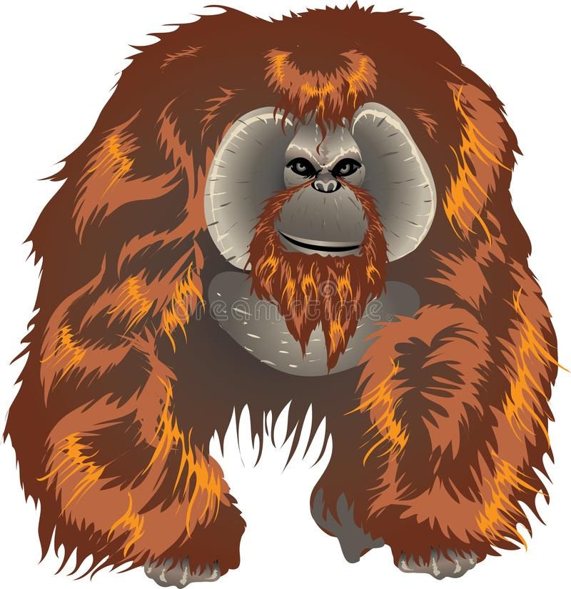 Orangutan, Big Ape From Asian Jungle Indonesia - Vector Illustration. Orangutans are currently only found in the rainforests of Borneo and Sumatra. Classified in vector illustration