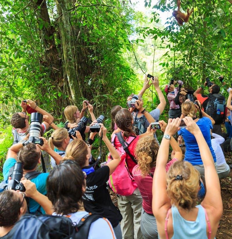 Orangutan obłąkanie fotografia royalty free