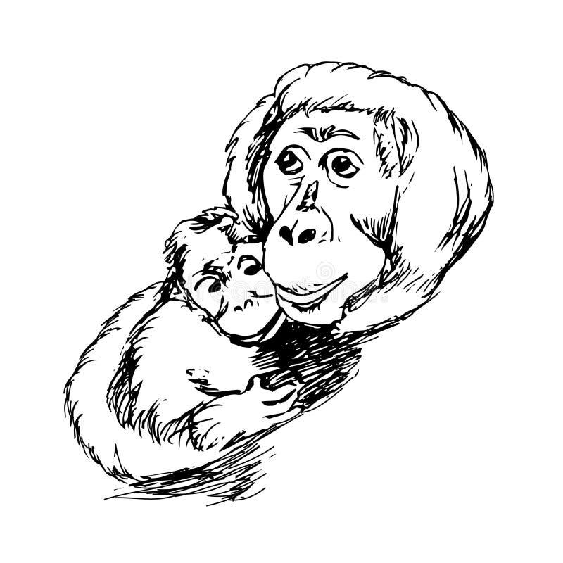 Orangutanes, monos - madre y cachorro libre illustration