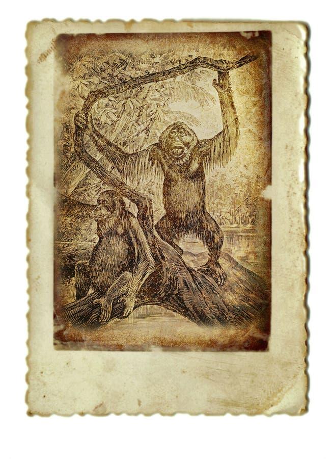 Download Orangutang stock illustration. Image of hand, ancient - 23148484