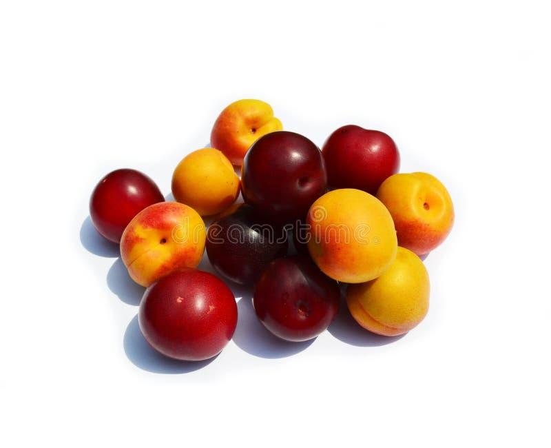 Oranje abrikozen en donkerrode die pruimen op wit worden geïsoleerd royalty-vrije stock afbeelding