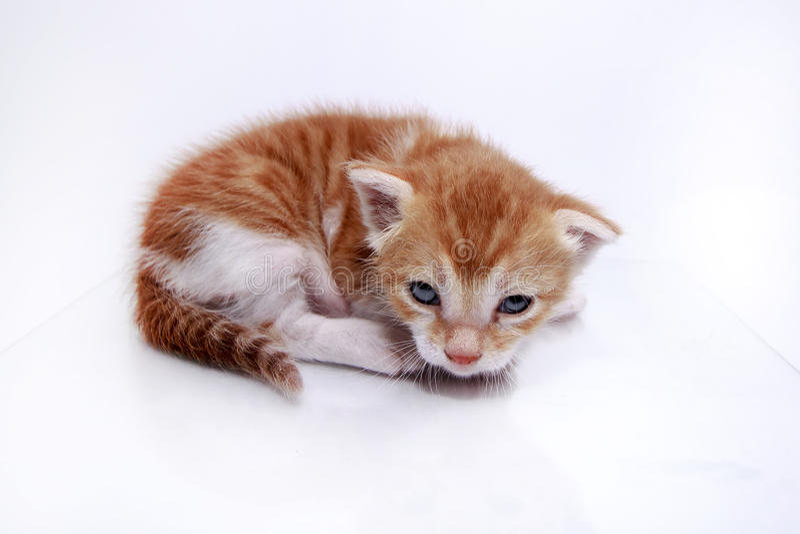 Oranje babykatje stock fotografie