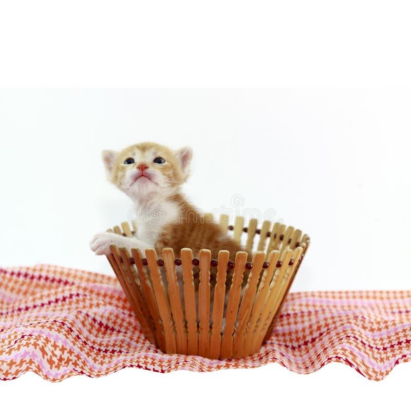 Oranje babykatje stock afbeeldingen