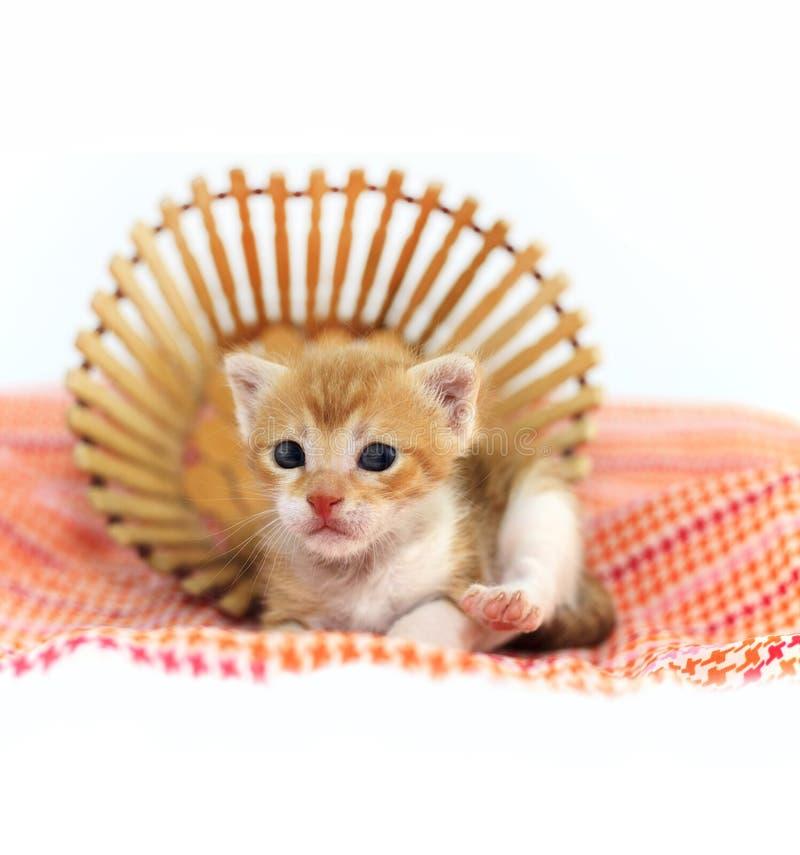Oranje babykatje stock foto's
