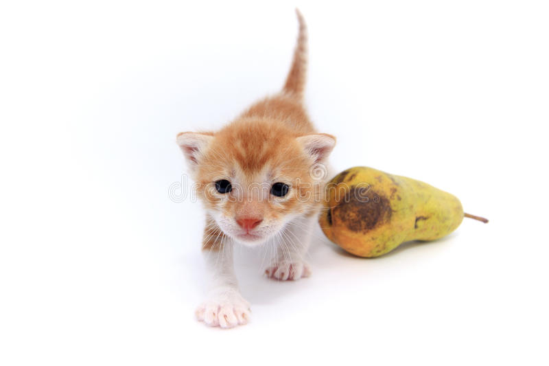 Oranje babykatje royalty-vrije stock foto's