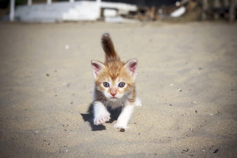 Oranje babykatje royalty-vrije stock foto