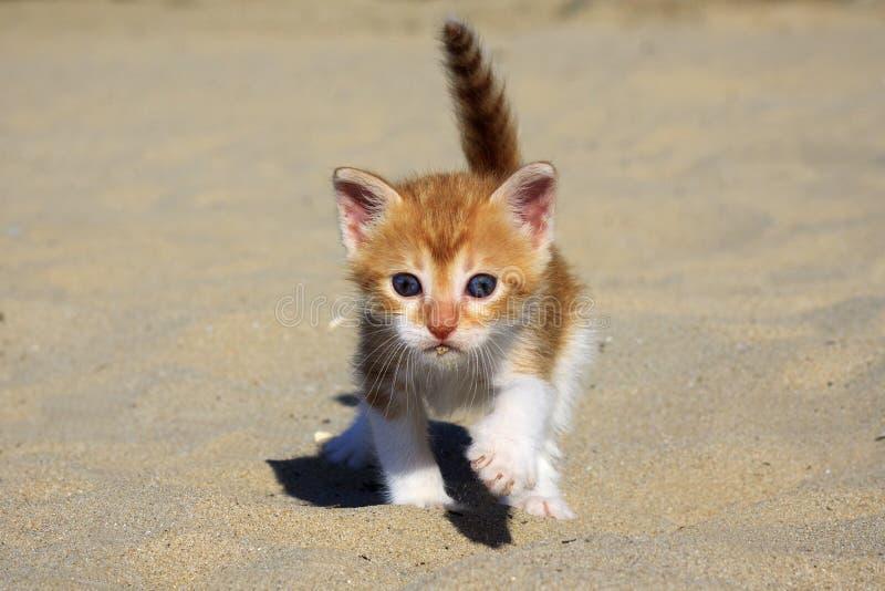 Oranje babykatje royalty-vrije stock afbeelding