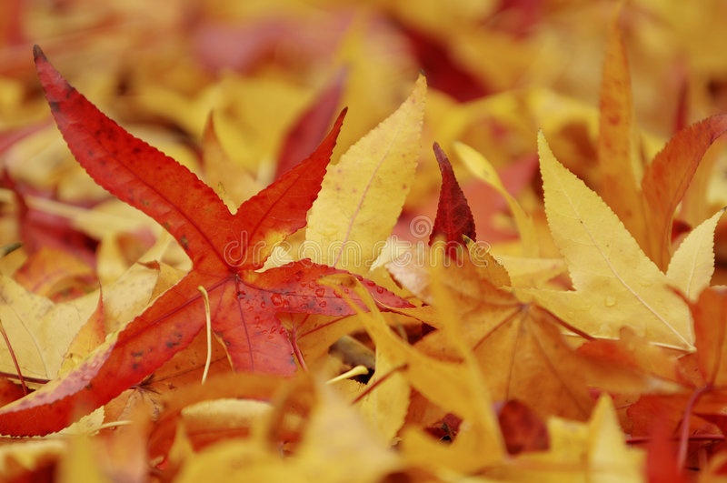 Oranje bladeren stock foto