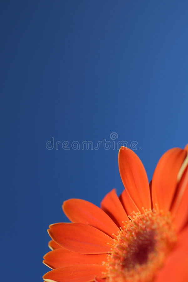 Oranje bloem blauwe hemel royalty-vrije stock foto's
