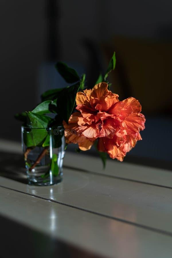 Oranje bloem in de zon stock fotografie