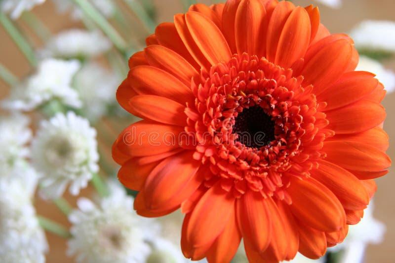 Oranje bloem met kleine witte bloesems stock foto's