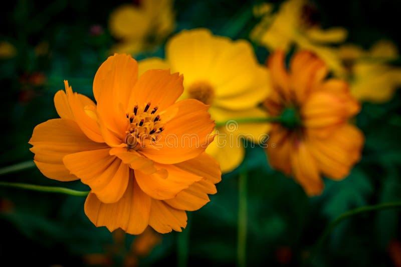 Oranje bloem op groene bladeren stock foto's
