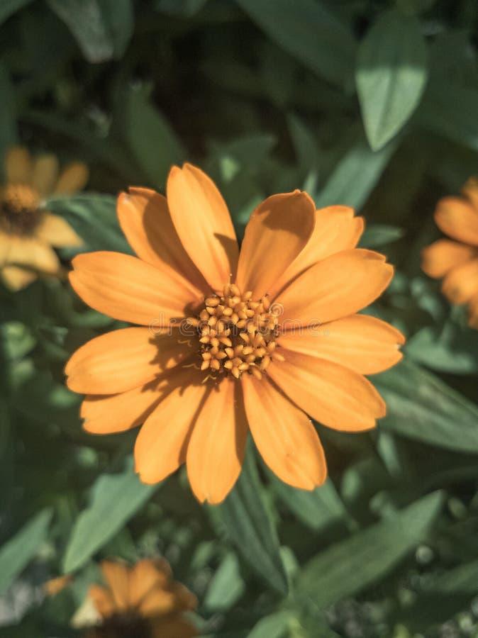 Oranje bloem op het gebied royalty-vrije stock afbeeldingen