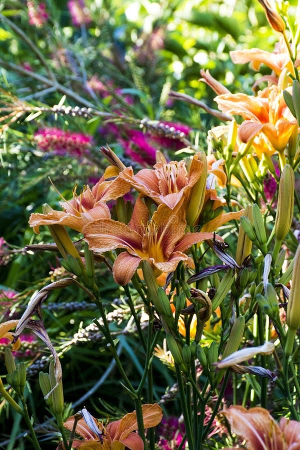 Oranje bloemen stock foto's
