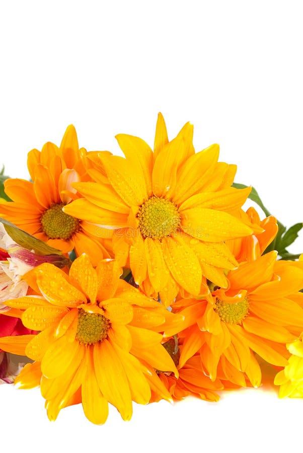 Oranje bloemen royalty-vrije stock foto