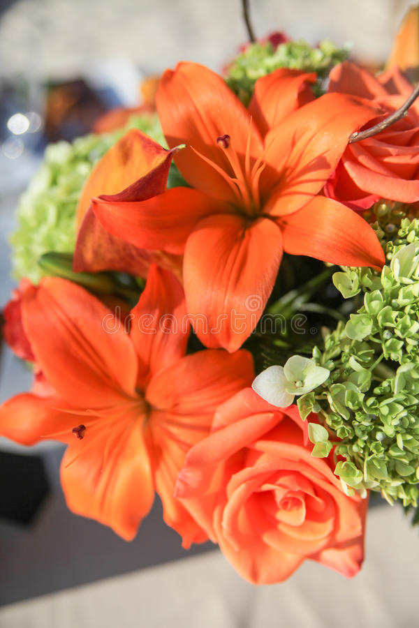 Oranje bloemen in bloei royalty-vrije stock foto