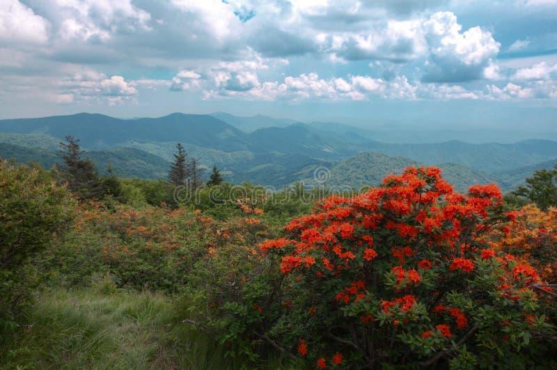 Oranje bloemen en bergen royalty-vrije stock foto's
