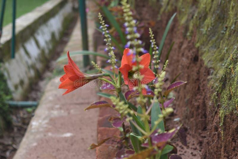 oranje bloemen met andere installaties stock fotografie