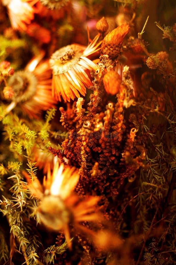 Oranje bloemen van de herfstweer royalty-vrije stock afbeeldingen