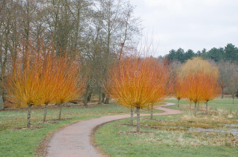 Oranje bomen in de wintertijd royalty-vrije stock foto's