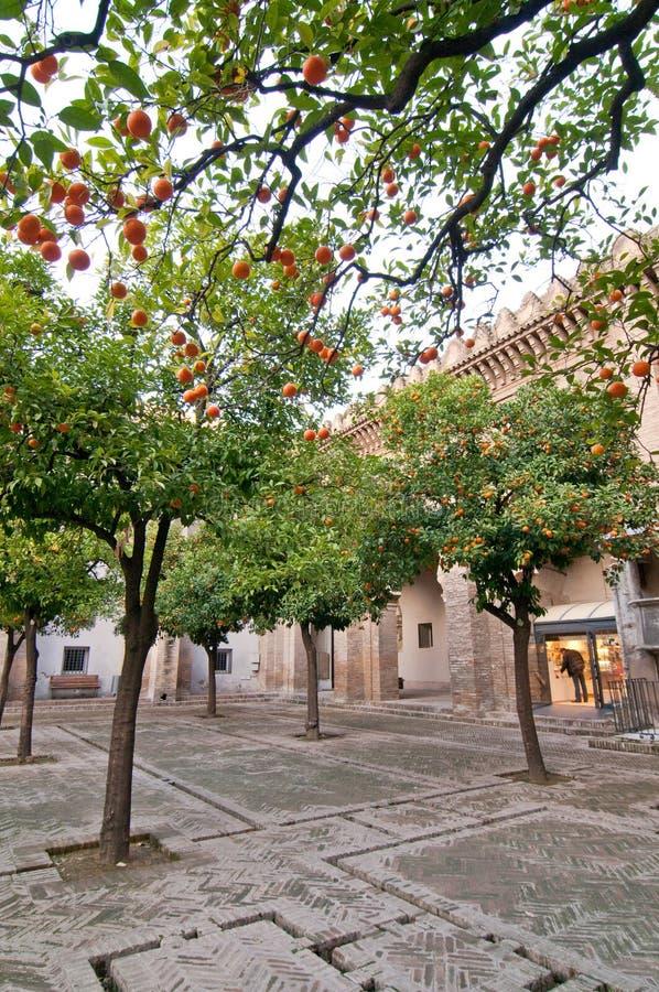 Oranje bomen in een klein vierkant in Sevilla, Spanje stock foto's