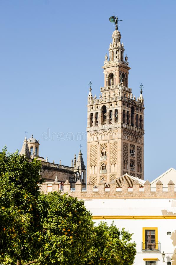 Oranje bomen en Sevilla Giralda bij de rug in een zonnige dag royalty-vrije stock foto
