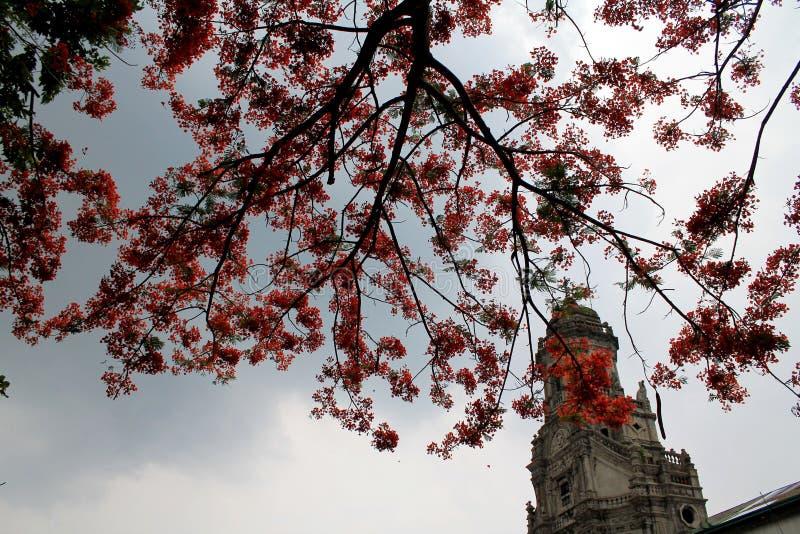 Oranje Boom in de Kerk stock afbeeldingen