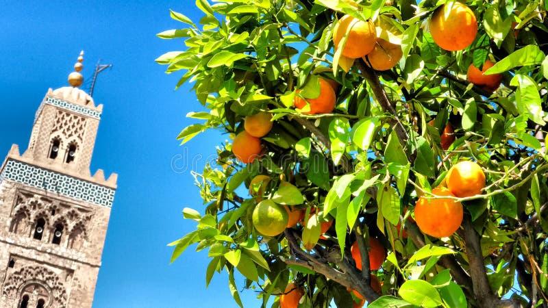 Oranje Boom, Koutoubia-Moskee, Marrakech royalty-vrije stock fotografie