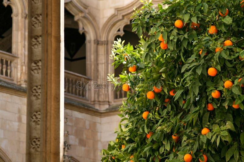 Oranje boom met gotisch stock afbeeldingen