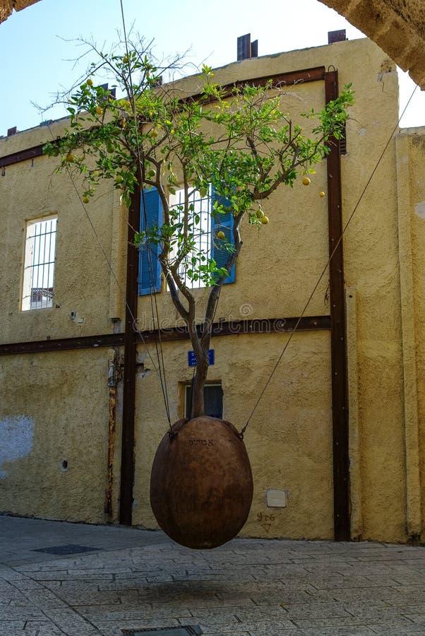 Oranje boom in steenschip die in de binnenplaats bij oud c levitatie ondergaan stock afbeeldingen