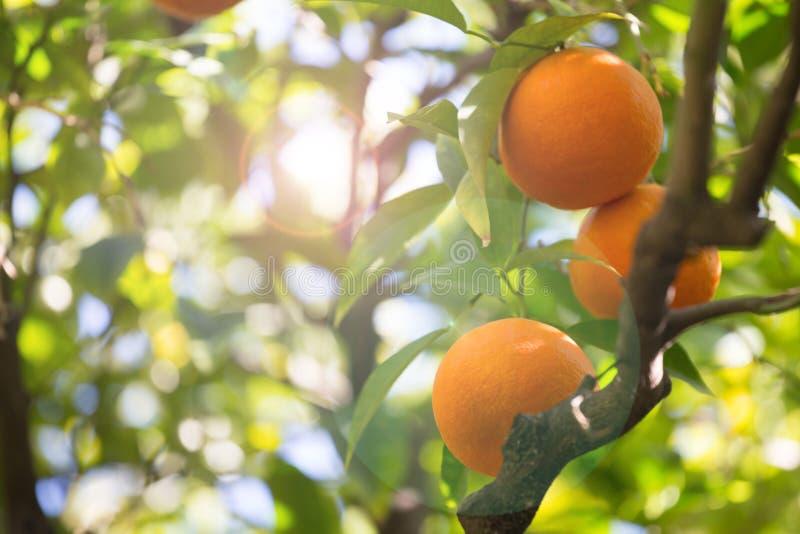 oranje boomachtergrond stock afbeelding
