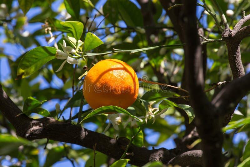 oranje boomachtergrond stock foto