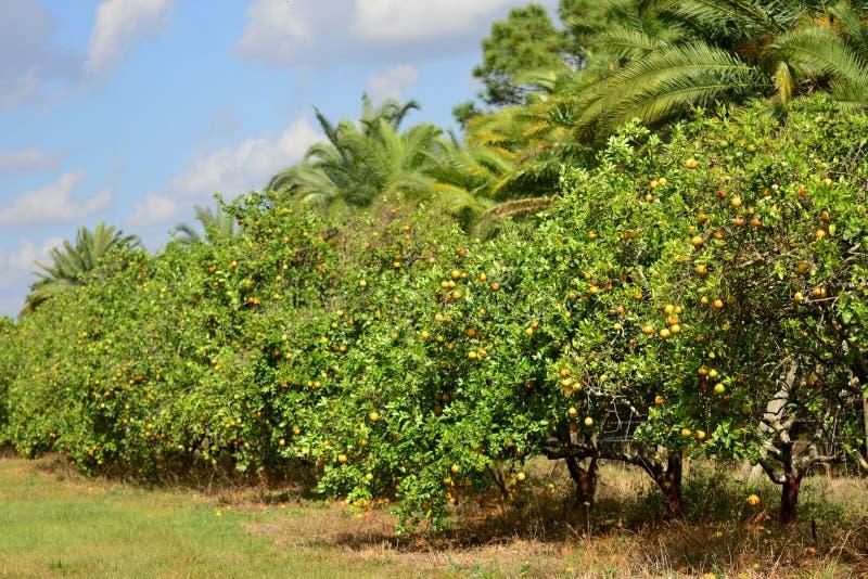 Oranje Bosje royalty-vrije stock afbeeldingen