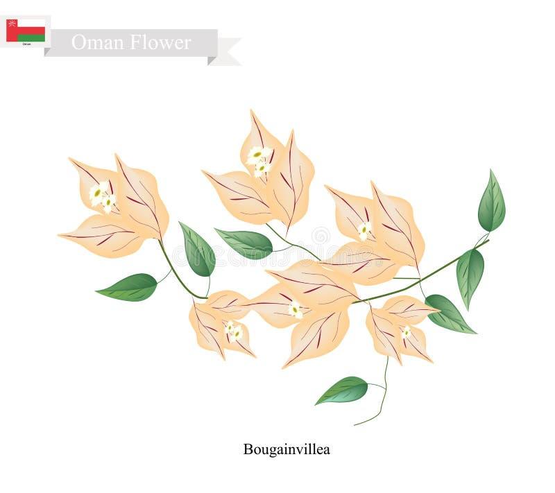 Oranje Bougainvilleabloemen, de Inheemse Bloem van Oman royalty-vrije illustratie